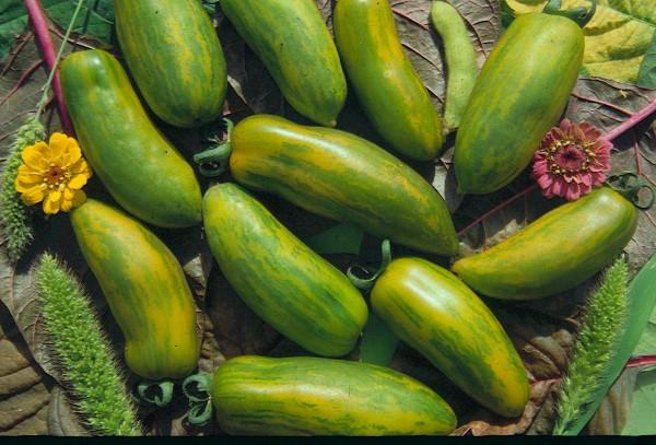 Green Sausage (Grünes Würstchen)