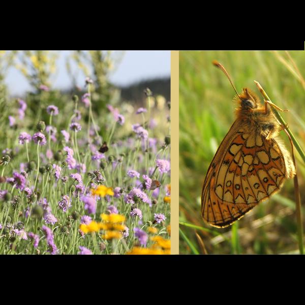 PAPILLON Der Schmetterlingsgarten-20 qm