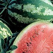 Crimson Sweet, Wassermelone