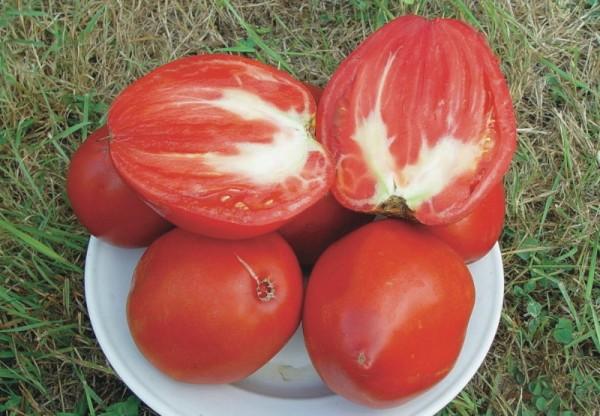 Reif Red (Fleischtomate, Ochsenherz)