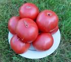 Brandywine, rote (Fleischtomate)