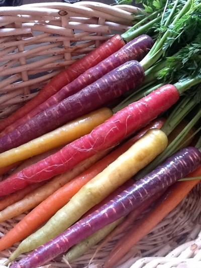 """Karotten Regenbogen-Mischung, Carottes Arc En Ciel"""""""