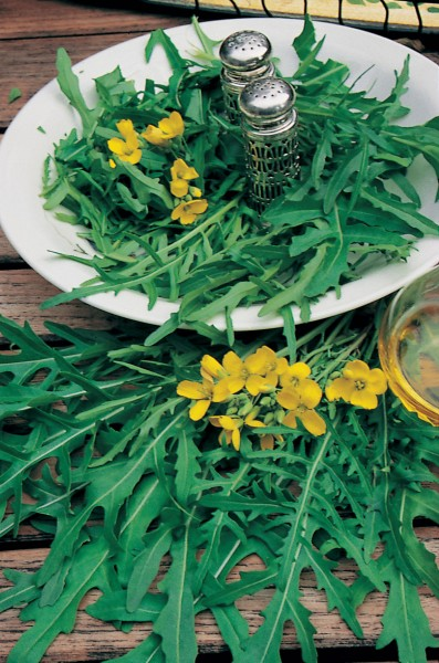 Rucola, wilder (Diplotaxis tenuifolia)