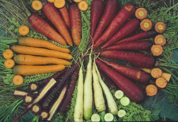 Mix verschiedenfarbiger Karotten