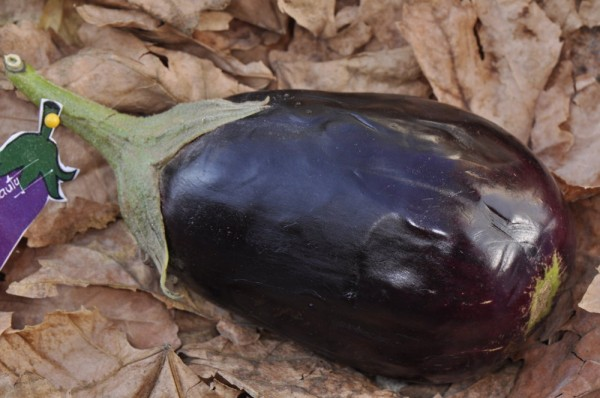 Imperial Black Beauty, Aubergine