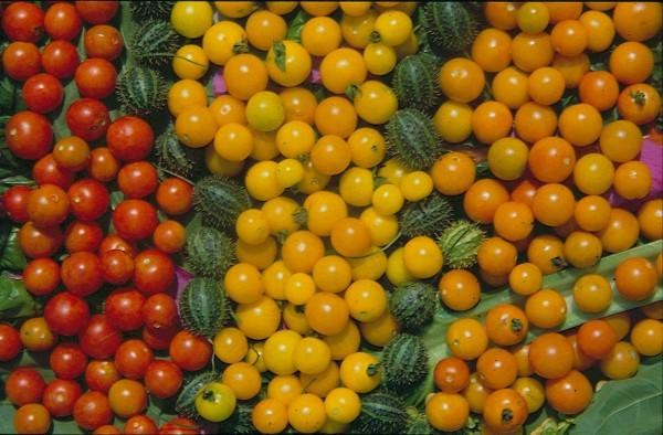 Bolivianische Obsttomate'