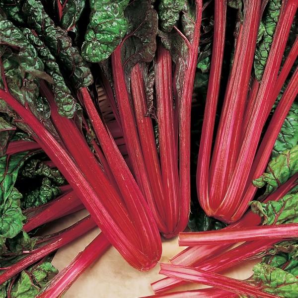 Roter Mangold