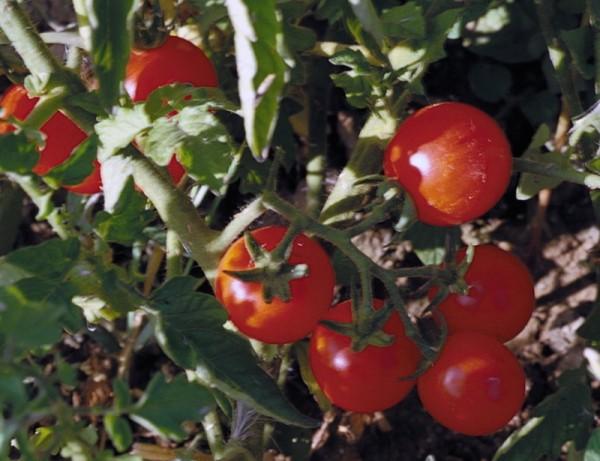 Cherry Chadwick-Angebot