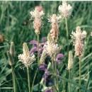 Blumenrasen ELFE-50 qm