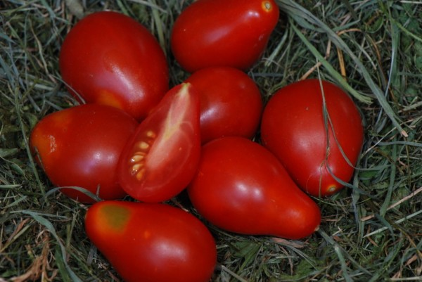 Poire Rouge (Rote Birne) Rote Kirschtomate