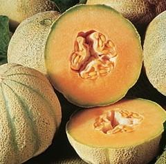 Honigmelone Cantaloup Charentais / Charentais Melone (Cucumis Melo)