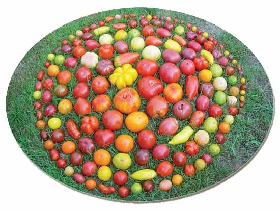 Tomaten-Mix 30 Korn
