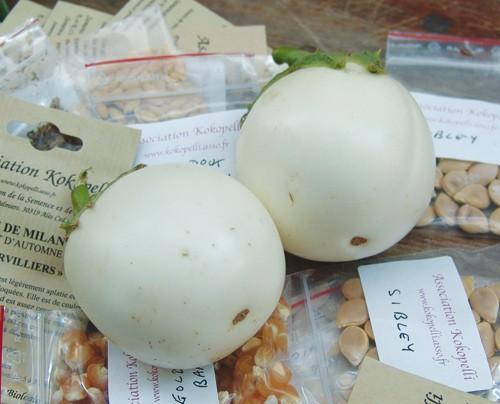 'Ovale Weiße' ('Golden Eggs'), Aubergine