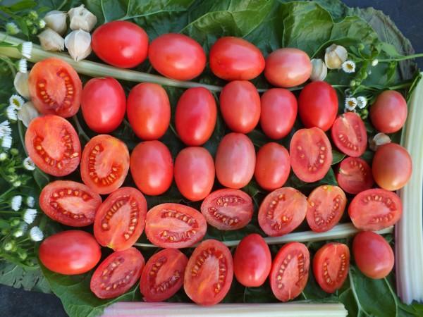 7-er Set Tomatenspezialitäten aus 7 Ländern
