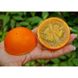 Naranjilla (Quitorange)