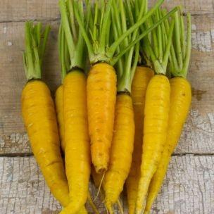 Gelbe Karotte