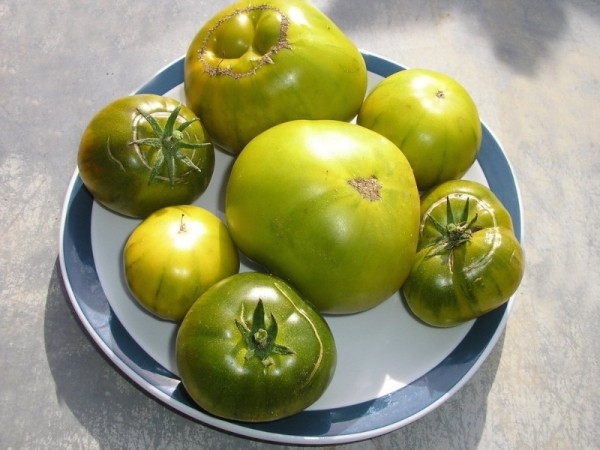 Green Pineapple (Fleischtomate)