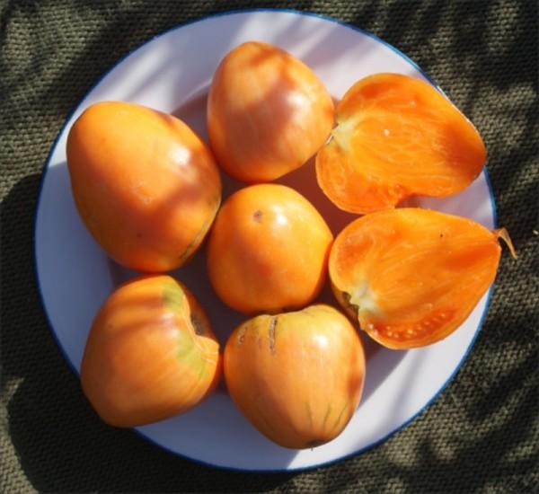Verna Orange
