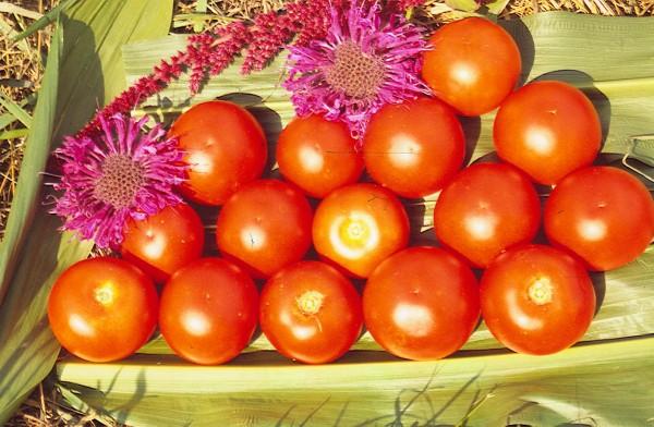 Triumph, Tomate
