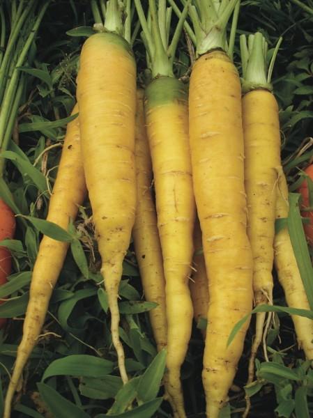 Gelbe aus Doubs, Jaune Doubs, Karotte