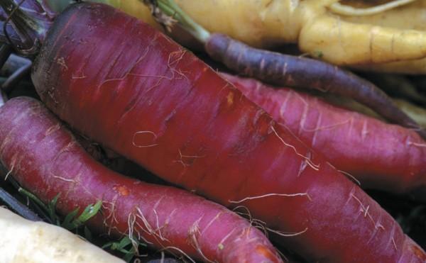 Violette Karotte Schwarze Spanische