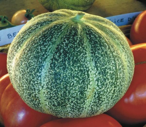 Ananasmelone, Honigmelone