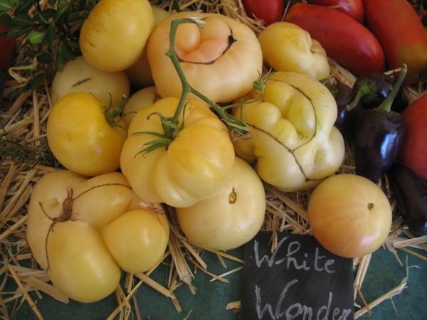 Tomate White Wonder-15 Korn