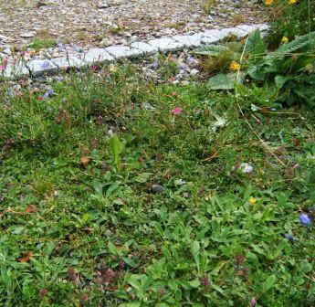 Blumenschotterrasen-50 qm